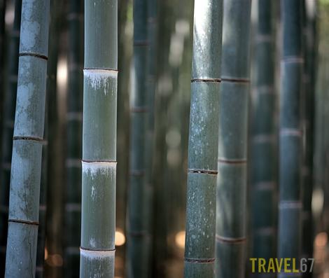 Bamboo, Arashiyama, Kyoto