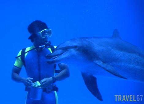 Dolphin Studio, Okinawa Expo Park