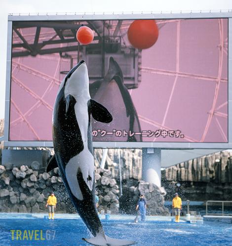 Kyu Nagoya Aquarium's Killer Whale
