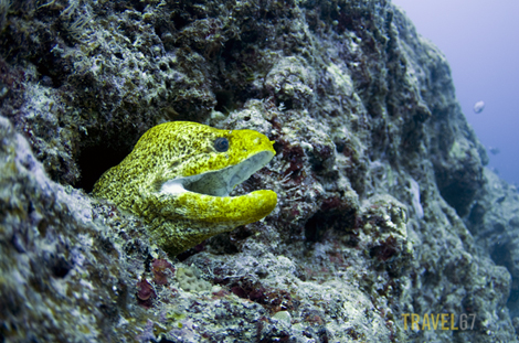 Moray Eel at Cape Zanpa