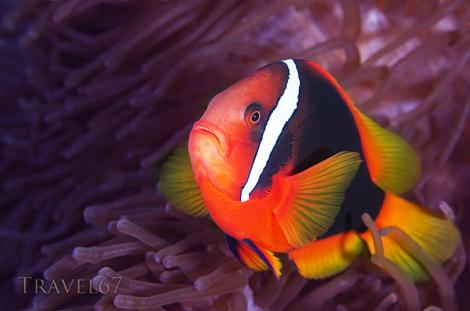 Grumpy Fish, Cape Maeda, Okinawa