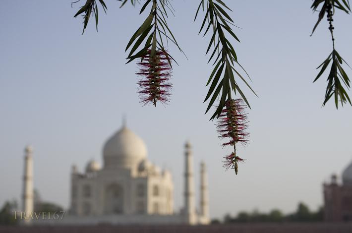Taj Mahal - Flowers