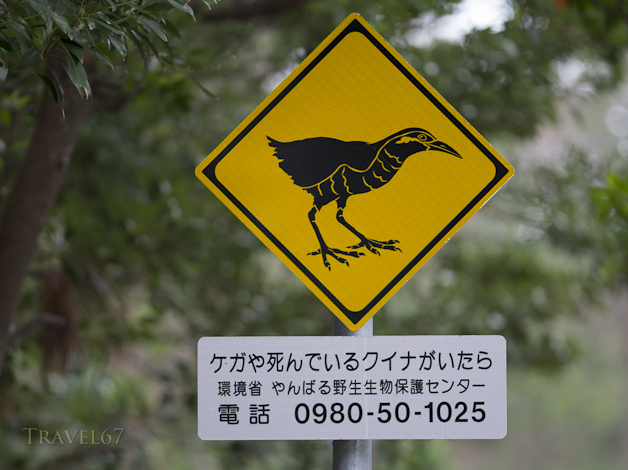 Protecting the Okinawa Rail