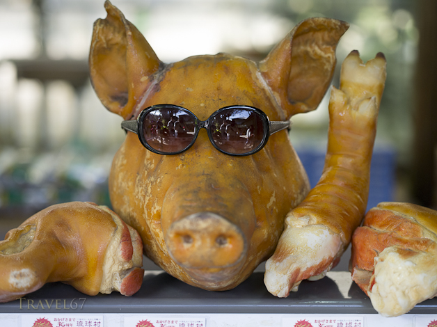 Pigs in Shades
