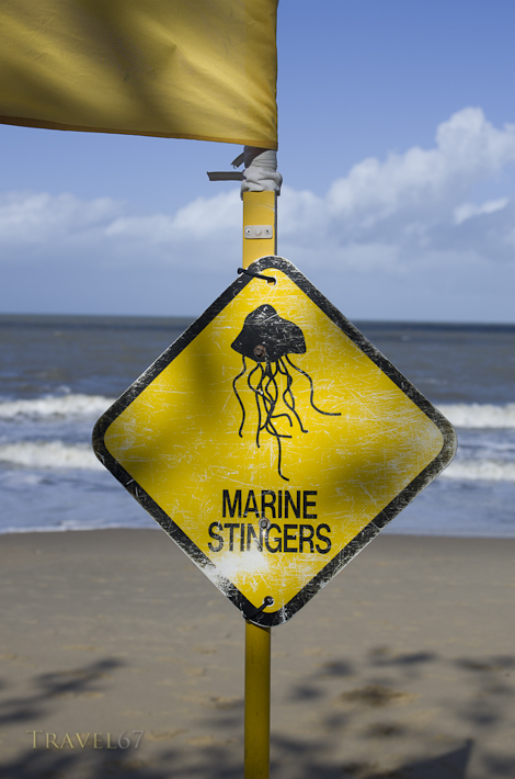 Marine Stingers - Palm Cove, Cairns