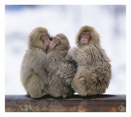 Snow Monkey Hug