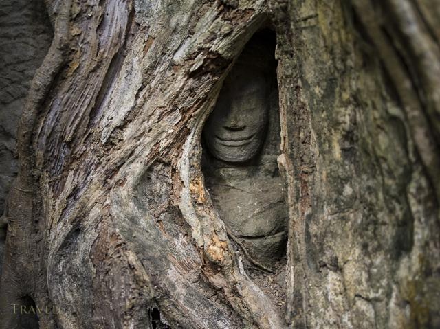 Entombed - Ta Prohm temple, Siem Reap, Cambodia