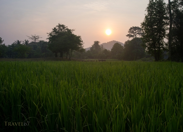 Sunrise over the rice fields near Banteay Srei Temple, Cambodia