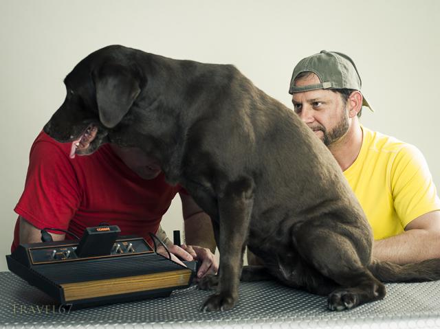 Jealous Dog