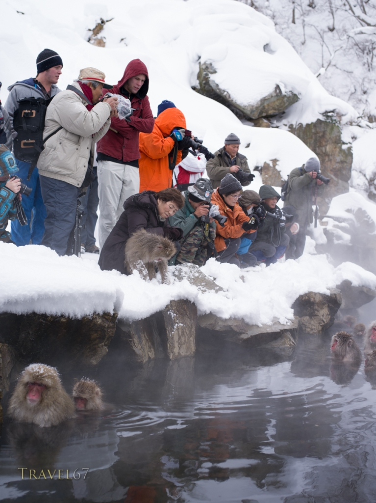 Japanese Snow Monkeys at Jigokudani Onsen, Nagano, Japan
