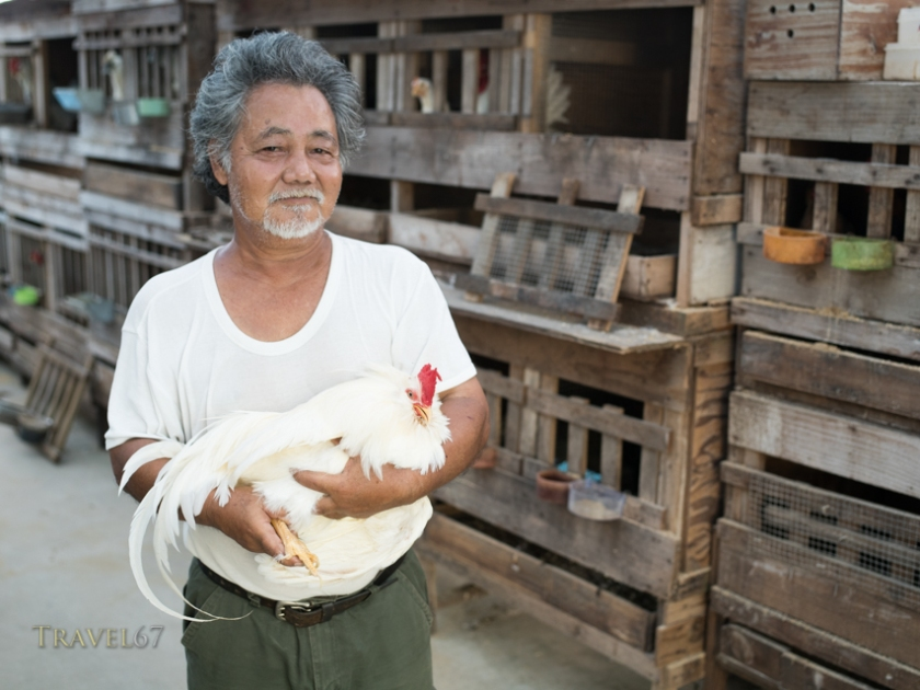 Continued to document life on Okinawa - Iha-san with his chan  chicken