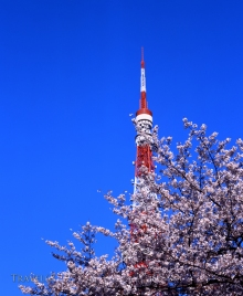 21_67tokyo64 Tokyo TowerSE900