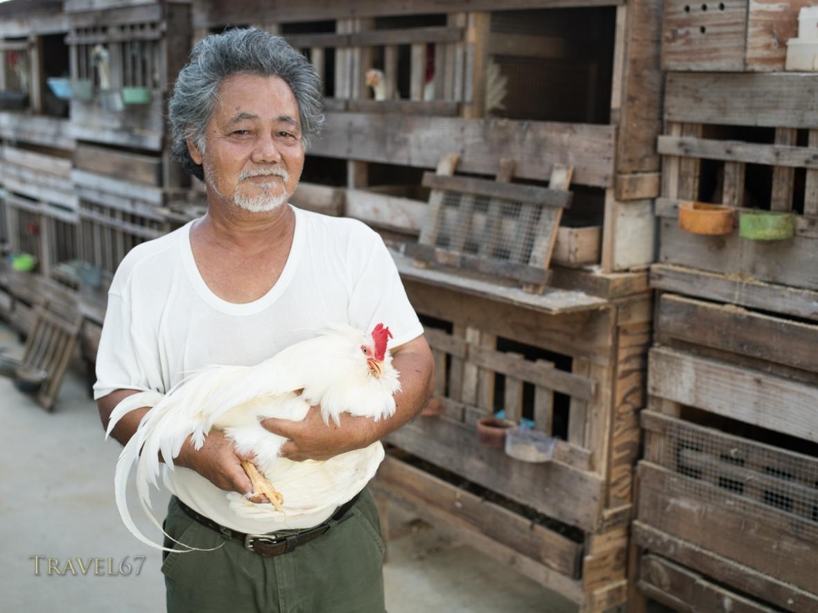 Iha-san with his chan  chickens チャーン  that are native to Okinawa. Uruma City, Okinawa.