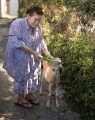 Shizuko Hanashiro 98 years old with at goat in Tsuboya Pottery District of Naha City, Okinawa.