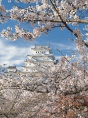 Himeji Castle and cherry blossom after the rennovations completed in 2015 .